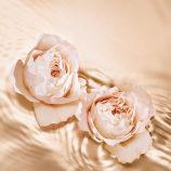 Jimmy Choo TEMPTING ROSE 125ML - image 3 of 3 in carousel