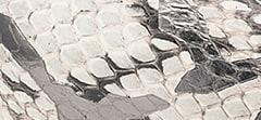 Graphic Gloss Elaphe