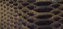 Metallic Tipped Python