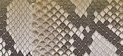 Metallic Dégradé Python