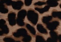 JC Leopard Print Pony